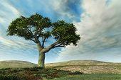 Banyan Tree Landscape