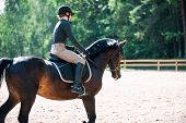 Training Process. Young Teenage Girl Riding Bay Horse On Arena At Equestrian School. Colored Outdoor poster