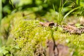 Moss Close Up. Moss In The Forest. Macro Shot. Juicy Greens. Moss Grows On Stones. Green Stones. poster