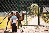 Tourist Man Walk In Europe Zoo With Camel. Animals In Captivity poster