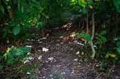 Spontaneous, Unauthorized Toilet In The Forest. The Path Is Littered With Paper poster