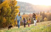 A Young Family With Two Small Children And A Dog On A Walk In Autumn Nature. poster