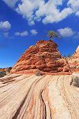 Постер, плакат: Национальный парк Зайон США Полосатый холмы из красного песчаника Знаменитый прыжки дерево «Резче дерево»