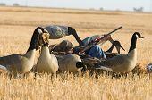 Boy caza del ganso