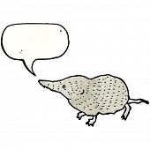 shrew illustration
