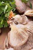 Vegetarian Food - Mushrooms