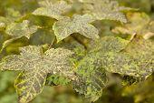 Dappled Autumn Leaves