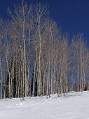 Downhill Woman  Skier