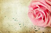Grunge retro background with pink rose and copy space