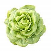 Hydrokultur-Gemüse