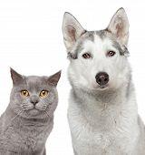 Gato e cachorro. Closeup retrato