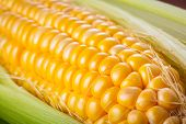 Fresh corncob close up
