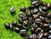 Black Coffee 'bean