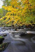 autumn woodland stream