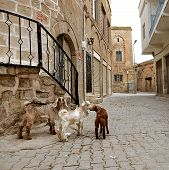 Stone Buildings Of Mardin Old Town In Turkey.