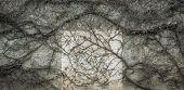 Leafless Vine Melancholic Background