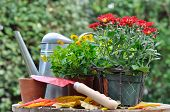 Potting Autumn Flowers