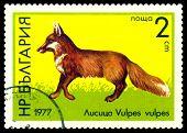 Vintage  Postage Stamp. Red Fox.