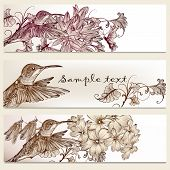image of hummingbirds  - Vector set of floral hand drawn brochures with hummingbirds for business cards design - JPG