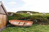 Sheep in green meadow