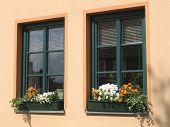Flower Windows