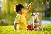 asiatische Jungen spielen mit Welpen auf Gras