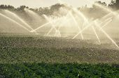 stock photo of water cabbage  - Watering cabbage field by sunset back lit - JPG