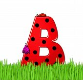 Alphabet Lady Bug Red B
