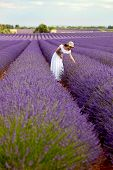 image of lavender field  - Young woman in white romantic dress with hat picking some lavender in lavender field holding a bouquet of lavender.