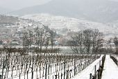 Snowed Vineyards