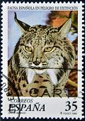 SPAIN - CIRCA 1998: A stamp printed in Spain shows a Iberian lynx circa 1998