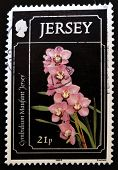 JERSEY - CIRCA 1999: A stamp printed in Jersey showing a cymbidium maufant circa 1999