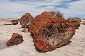 Petrified Wood At Petrified Forest National Park, Arizona