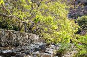 Riverbed Wadi Bani Habib