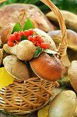 Fresh Mushrooms In Basket, Close Up View