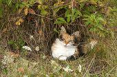 Colorful cat lying in rural bush