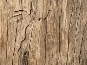 Timber Texture Background