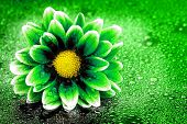 Fresh green and yellowe flower with water drops for environmental friendly