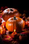Traditional pumpkins for Thanksgiving and  Halloween
