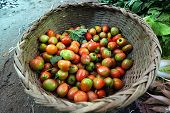 Small organic tomatoes in basket in Asian traditional fresh vegetables market