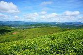 Impressive Landscape, Dalat, Vietnam, Tea Plantation