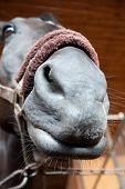 Horse Funny Portrait