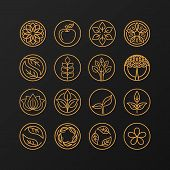Vector Abstract Emblem - Nature Symbols