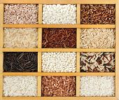 variety of rice grains (white, brown, black, wild, basmati, arborio, short, long grain) in vintage w