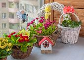 Easter Composition Of Daisies, Primroses, Geraniums In Baskets