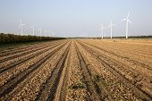 Wind Turbines And Onion Field In The Netherlands