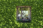 ivy green  window