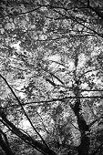 Under A Tree B&w
