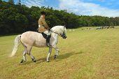 Pferd mit Jockey in Dressur Tests im park