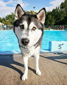 a cute dog at a local public swimming pool